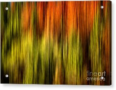 Rainbow Delight Acrylic Print by Az Jackson