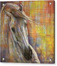 Rainbow  Acrylic Print by Silvana Gabudean