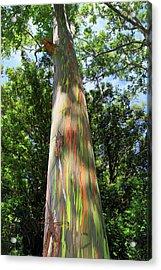 Rainbow Tree Acrylic Print by Pierre Leclerc Photography