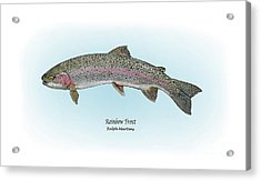 Rainbow Trout Acrylic Print by Ralph Martens