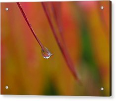 Raindrop Acrylic Print by Juergen Roth