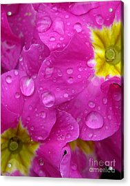 Raindrops On Pink Flowers Acrylic Print by Carol Groenen