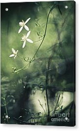 Rainforest Dreaming Acrylic Print by David Lade