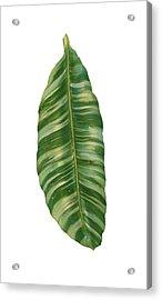 Rainforest Resort - Tropical Banana Leaf  Acrylic Print by Audrey Jeanne Roberts