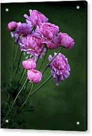 Ranunculus Acrylic Print by James Steele