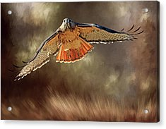 Raptor Acrylic Print by Donna Kennedy