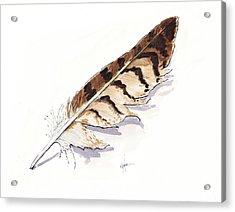 Raptor Feather Acrylic Print by Christine Camp