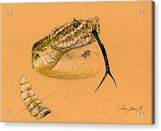 Rattlesnake Painting Acrylic Print by Juan  Bosco