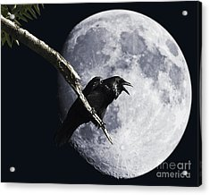 Raven Barking At The Moon Acrylic Print by Wingsdomain Art and Photography