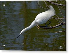 Ready..set.. Acrylic Print by Christopher Holmes
