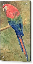 Red And Blue Macaw Acrylic Print by Henry Stacey Marks