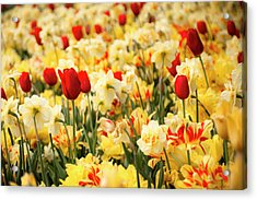 Red And Yellow Acrylic Print by Tamyra Ayles