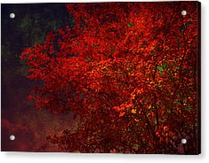 Red Autumn Tree Acrylic Print by Susanne Van Hulst