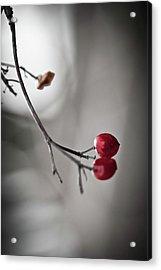 Red Berries Acrylic Print by Mandy Tabatt