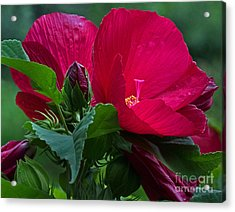 Red By The Pond Acrylic Print by Robert Pilkington