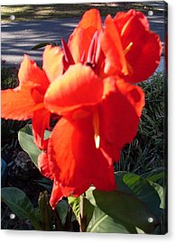 Red Canna Lily Acrylic Print by Warren Thompson