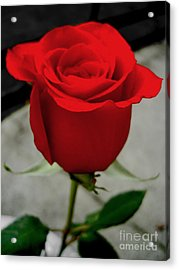 Red Dream Rose Acrylic Print by Nina Ficur Feenan