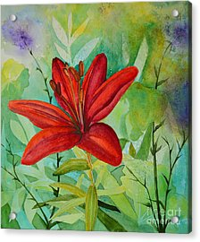 Red Garden Lily Acrylic Print by Terri Robertson