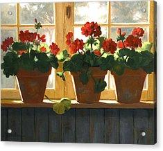 Red Geraniums Basking Acrylic Print by Linda Jacobus