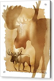 Red Moose 2 Acrylic Print by Tracy Herrmann