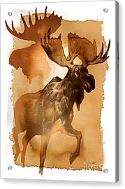 Red Moose 1 Acrylic Print by Tracy Herrmann