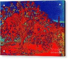 Red Palo Verdi Acrylic Print by Summer Celeste