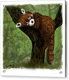 Red Panda Napping Acrylic Print by Scott Rolfe