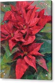 Red Poinsettias Acrylic Print by Anna Rose Bain