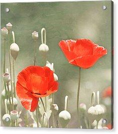 Red Poppies Acrylic Print by Kim Hojnacki