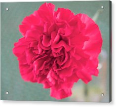 Red Rose Acrylic Print by Dick Willis