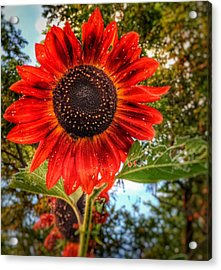Red Sun Acrylic Print by Jame Hayes