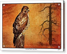 Red-tailed Hawk Escape Plan Acrylic Print by John Williams