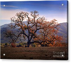 Red Top Tree Acrylic Print by Frank Bez