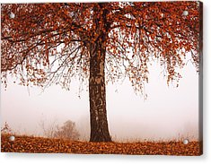 Red Tree Acrylic Print by Evgeni Dinev