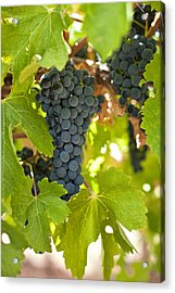 Red Vines Acrylic Print by Ulrich Schade