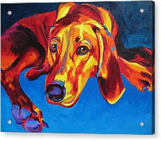 Redbone Coonhound Acrylic Print by Alicia VanNoy Call