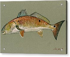 Redfish Watercolor Painting Acrylic Print by Juan  Bosco