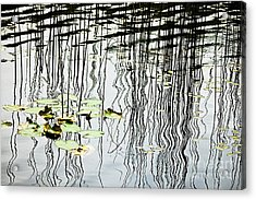 Reeds And Reflections Acrylic Print by Dave Fleetham - Printscapes