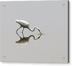 Reflecting Egret Acrylic Print by Al Powell Photography USA