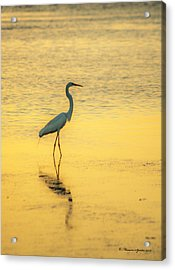 Reflection Acrylic Print by Marvin Spates