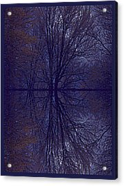 Reflection On Trees In The Dark Acrylic Print by Joy Nichols