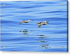 Reflections Of Flight Acrylic Print by Shoal Hollingsworth