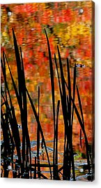Reflections On Infinity Acrylic Print by Angela Davies