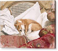 Regal Beagle Acrylic Print by Debra Jones