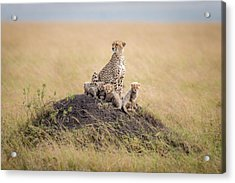 Regal Protector Acrylic Print by Ted Taylor