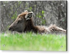 Relaxin' Acrylic Print by Guy Whiteley
