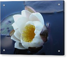 Relaxing In The Pond Acrylic Print by Martha Ayotte