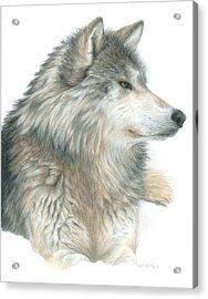Relaxing Wolf Acrylic Print by Carla Kurt