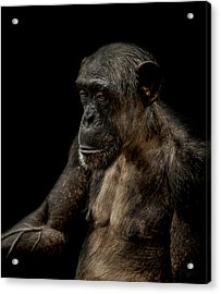Remorse Acrylic Print by Paul Neville