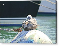 Resting In The Marina Acrylic Print by Shoal Hollingsworth
